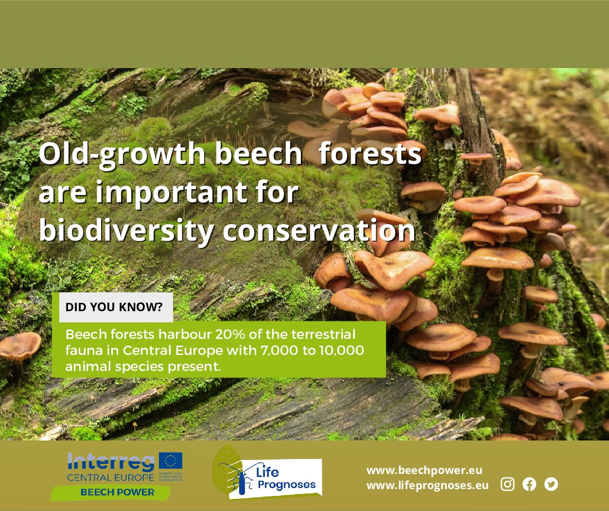 Old-growth beech forest are important for biodiversity conservation